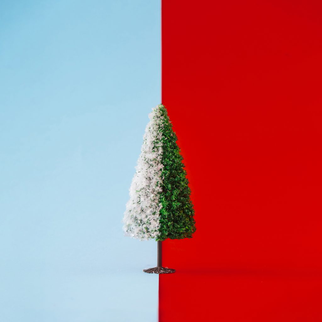 Christmas tree half with snow on duotone background. Minimal winter season New Year creative concept.